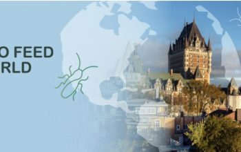 Le CDBQ partenaire du congrès international Insects to Feed the World